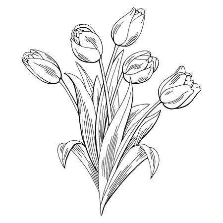 Tulp bloem grafische zwart-wit geïsoleerde boeket schets illustratie vector