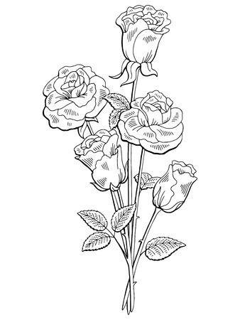 Rose flower graphic black and white isolated bouquet sketch illustration vector Vettoriali
