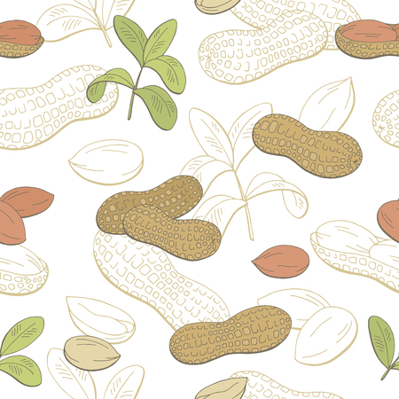 Peanut graphic color sketch seamless pattern illustration vector
