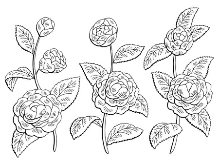 Camellia flower graphic black and white isolated sketch illustration vector