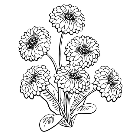 Daisy flower graphic black and white isolated bouquet sketch illustration vector