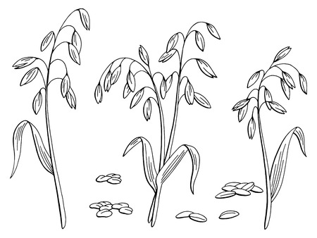 Oat plant graphic black and white isolated sketch illustration vector Stock Illustratie