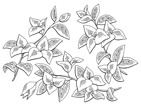 Bougainvillea flower graphic black and white isolated sketch illustration set vector