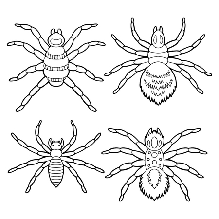 Spider set graphic black and white isolated sketch illustration vector