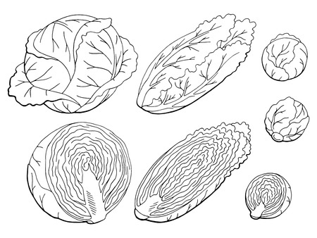 Cabbage set graphic black and white isolated sketch illustration vector