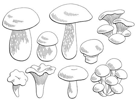 Key Of A Mushroom Diagram