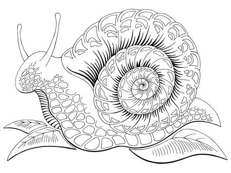 Escargot doodle graphique noir blanc isolé croquis illustration vecteur Vecteurs