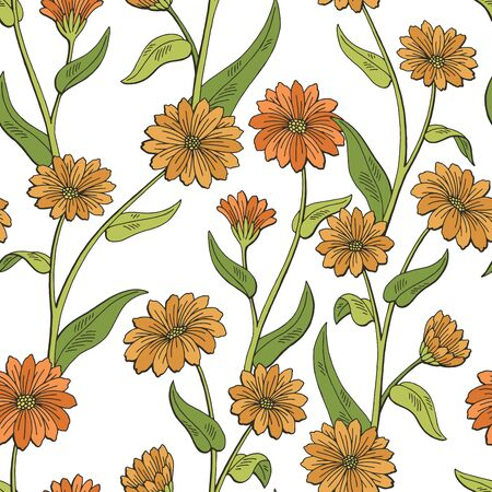 Calendula flower graphic color seamless pattern sketch illustration vector 矢量图像
