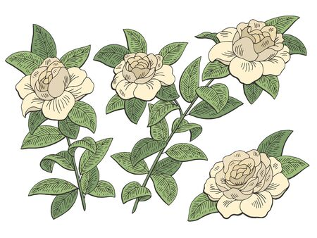 Gardenia flower branch graphic color isolated sketch illustration vector Illustration