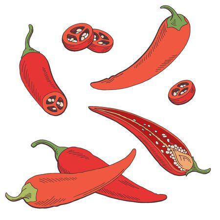Chili pepper graphic color isolated sketch illustration vector Stock Illustratie