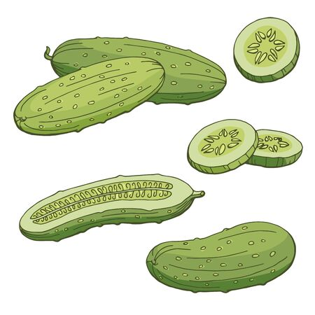Cucumber graphic color isolated sketch illustration vector