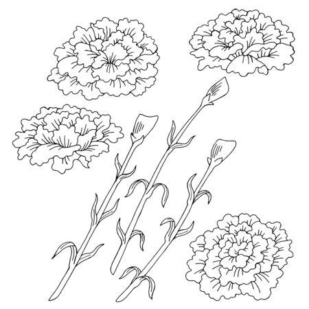 Carnation flower graphic black white isolated sketch illustration vector