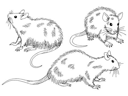 Rat set graphic black white isolated sketch illustration vector