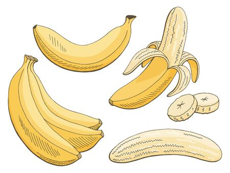 Banana fruit graphic color isolated sketch illustration vector Vetores