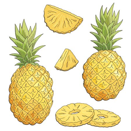 Pineapple fruit graphic graphic color isolated sketch illustration vector