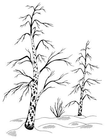 Birch tree grove winter graphic black white sketch landscape illustration vector