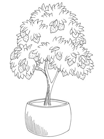 Lemon tree fruit graphic black white isolated sketch illustration vector Ilustracja