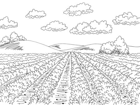 Potato field graphic black white landscape sketch illustration vector