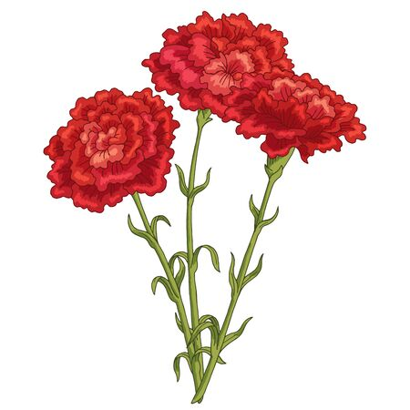 Carnation flower graphic color isolated bouquet sketch illustration vector 일러스트