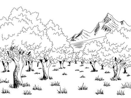 Vector de ilustración de boceto de paisaje blanco negro gráfico de olivar Ilustración de vector