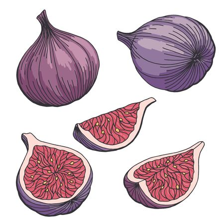 Fig fruit graphic set color isolated sketch illustration vector