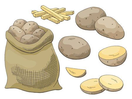 Potatoes vegetable graphic color isolated sketch illustration vector Illustration