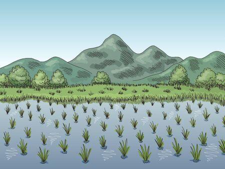 Rice field graphic color landscape sketch illustration vector
