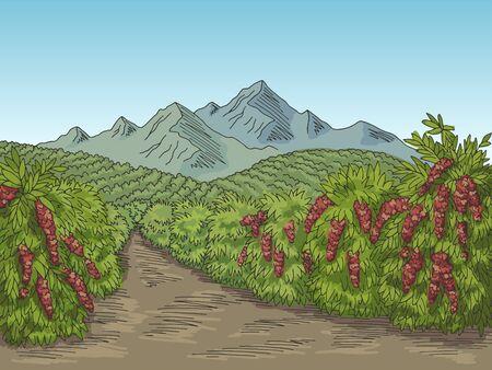 Coffee plantation graphic color landscape sketch illustration vector