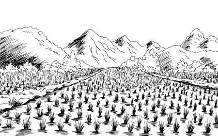 Rice field graphic black white landscape sketch illustration vector Banco de Imagens - 150544951