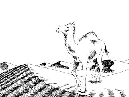 Camel desert graphic black white landscape sketch illustration vector 矢量图像