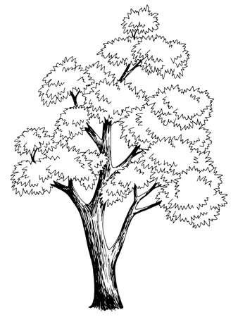 Maple tree graphic black white isolated sketch illustration vector Vetores