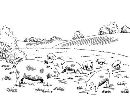Pigs feeding grass on the hill graphic black white sketch illustration vector