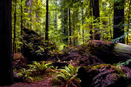 woodsy: A fallen giant tree lies on a forest floor.
