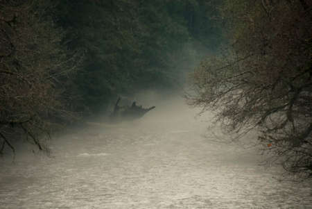 Heavy mist settles over a river in an Oregon forest. Stock Photo