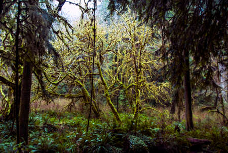 woodsy: A little tree covered in moss in the middle of a woods. Stock Photo