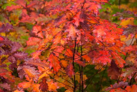 pinks: Vivid fall colors of reds, pinks and golds in a woodsy forest.