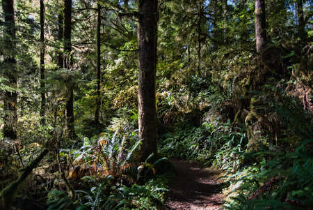 dappled: A path leads into a light dappled forest. Stock Photo