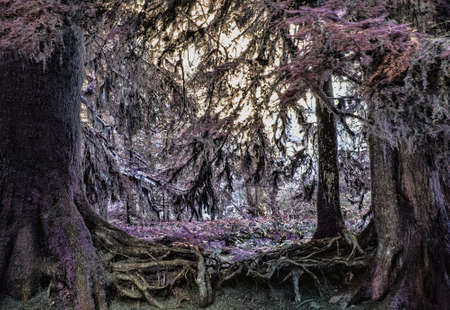 intertwined: The intertwined roots of two trees frame a magical fairy forest.