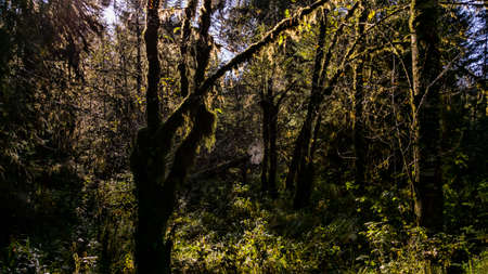 lacey: A spider web strung between trees in a rainforest. Stock Photo
