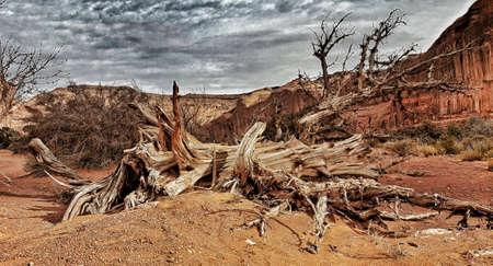 Dead Desert Tree Stock Photo