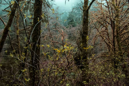 woodsy: Misty Mossy Forest Stock Photo