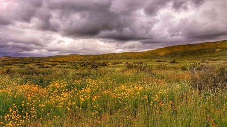 A Field of Wildflowers Stock Photo