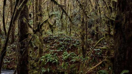 Humboldt Rain Forest Stock Photo