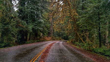 California Forest Highway