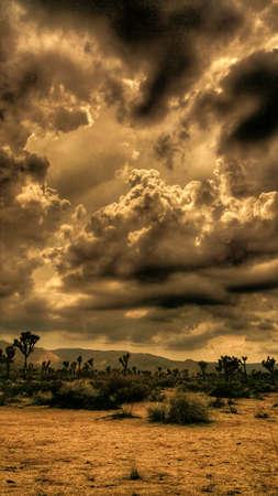 Stormy Joshua Desert Sunset