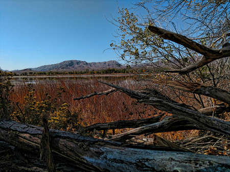 Fallen tree branches on a lakeshore in Pahranagat National Wildlife Refuge. Stok Fotoğraf