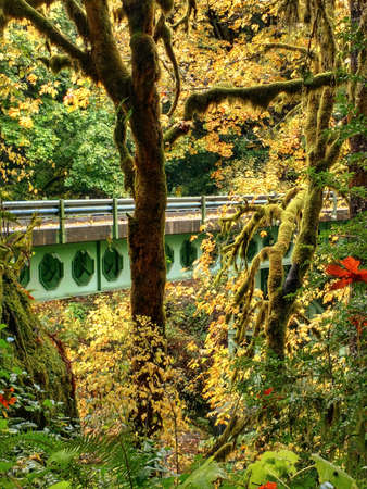 A green steel bridge over a river gorge in a forest in autumn in Oregon.