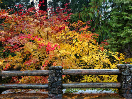 The bright colors of autumn fall foliage by a rustic fence in Oregon. Banque d'images - 118385721