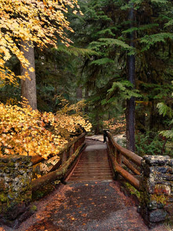 A path with rails across a footbridge in a rainy forest in central Oregon. Stok Fotoğraf