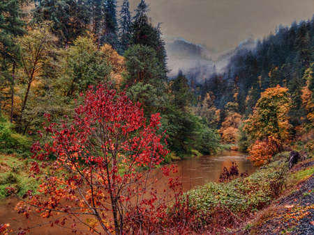 Oregon fall foliage along a river by Loon Lake Road in western Oregon. Banque d'images - 118385746